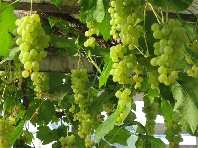 Domaine de Brescou – viner med låg svavelhalt!