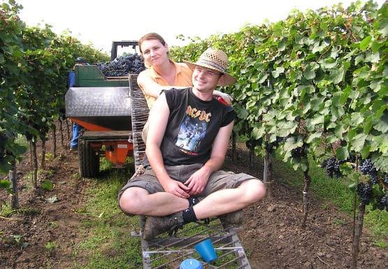 Vin från Burgenland, Artisan