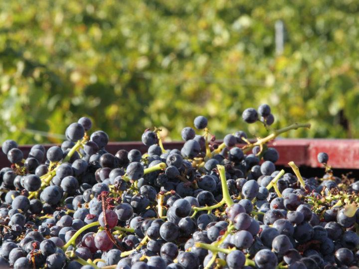 Vad är skillnaden mellan naturvin, ekologiskt och biodynamiskt vin?